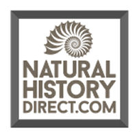 Natural History Collectables , Fossils & Minerals
