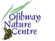 Ojibway insects